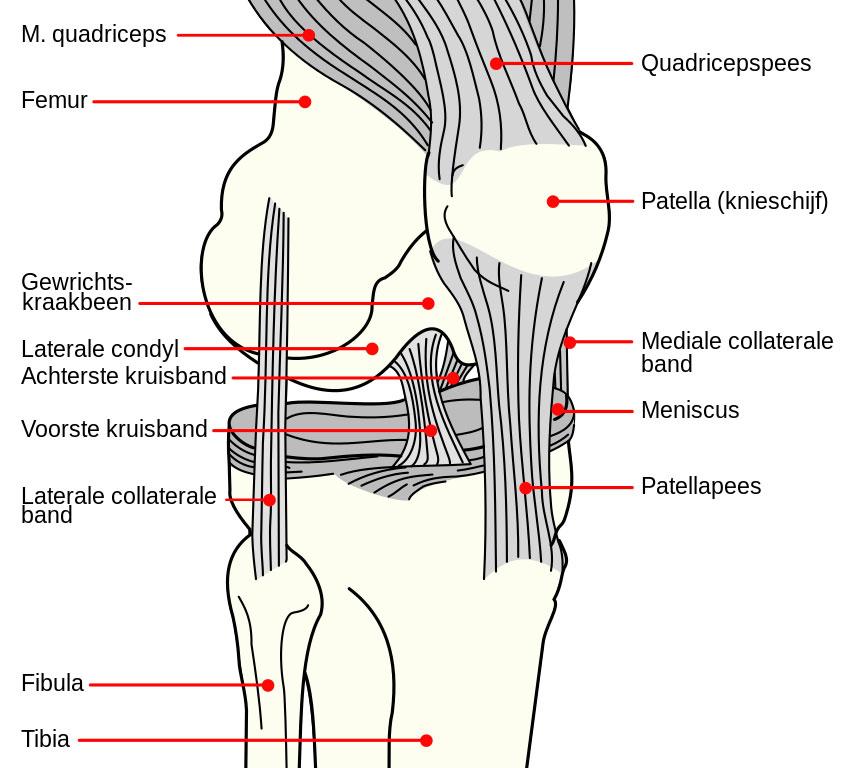 Knee_diagram